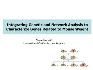Coordinating Hereditary and System Investigation to Describe Qualities Identified with Mouse Weight