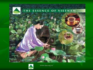 THE Improvement OF VIETNAM TEA INDUSTRY