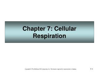 Section 7: Cell Breath