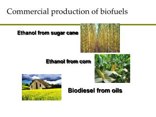 Business generation of biofuels