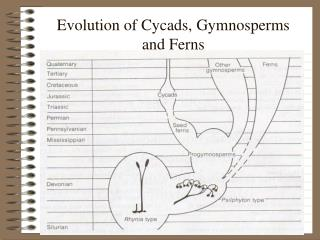 Advancement of Cycads, Gymnosperms and Plants