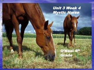 Unit 3 Week 4 Spiritualist Steed