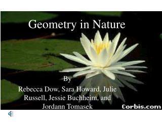 Geometry in Nature
