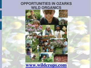 OPPORTUNITIES IN OZARKS WILD ORGANICS