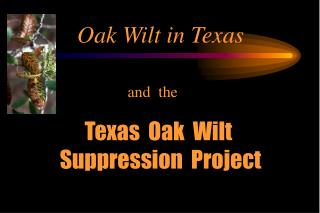 Oak Wilt in Texas