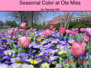 Regular Color at Ole Miss by Denise Hill