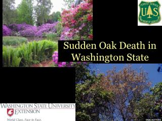 Sudden Oak Death in Washington State