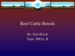 Meat Cattle Breeds