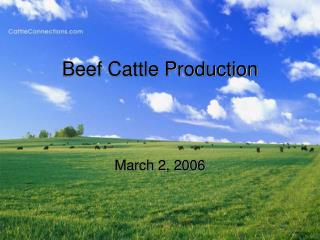 Meat Cattle Production