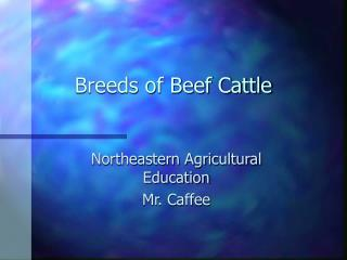 Types of Beef Cattle
