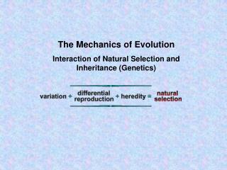 The Mechanics of Evolution Interaction of Natural Selection and Inheritance Genetics