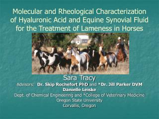 Sub-atomic and Rheological Characterization of Hyaluronic Acid and Equine Synovial Fluid for the Treatment of Lameness