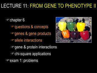 Address 11: FROM GENE TO PHENOTYPE II