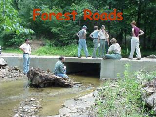 Timberland Roads