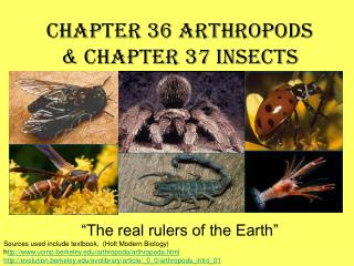 Part 36 Arthropods Chapter 37 Insects