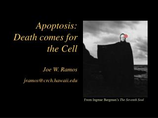 Apoptosis: Death seeks the Cell Joe W. Ramos jramoscrch.hawaii