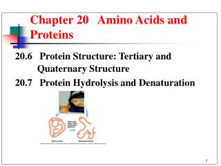 Section 20 Amino Acids and Proteins