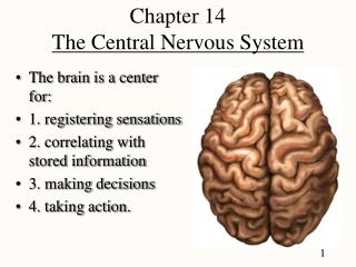 Section 14 The Central Nervous System