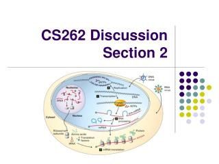 CS262 Discussion Section 2