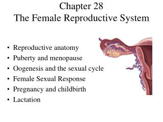 Section 28 The Female Reproductive System
