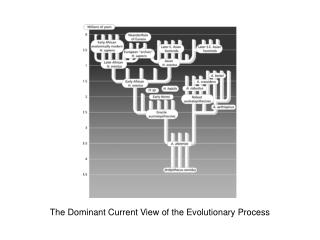 The Dominant Current View of the Evolutionary Process