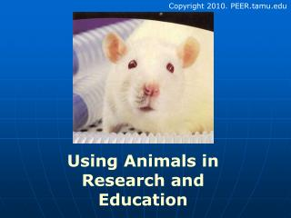 Utilizing Animals as a part of Research and Education