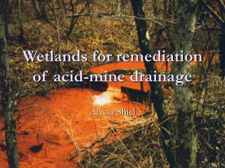 Wetlands for remediation of corrosive mine seepage