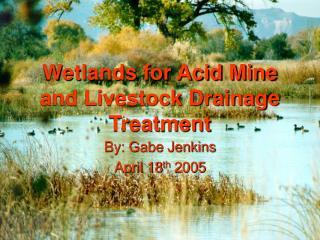 Wetlands for Acid Mine and Livestock Drainage Treatment