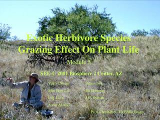 Extraordinary Herbivore Species Grazing Effect On Plant Life