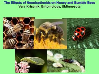 The Effects of Neonicotinoids on Honey and Bumble Bees Vera Krischik, Entomology, UMinnesota
